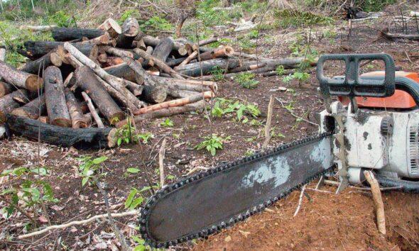 crime ambiental amazônia