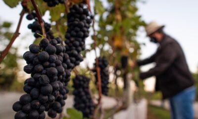 Feira da Uva e Vinho